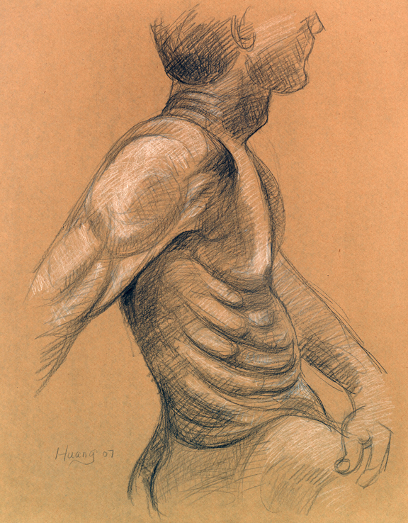 Male Torso Study (graphite and white chalk)