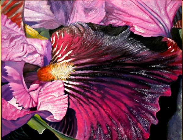 Iris No. 5 (oil)